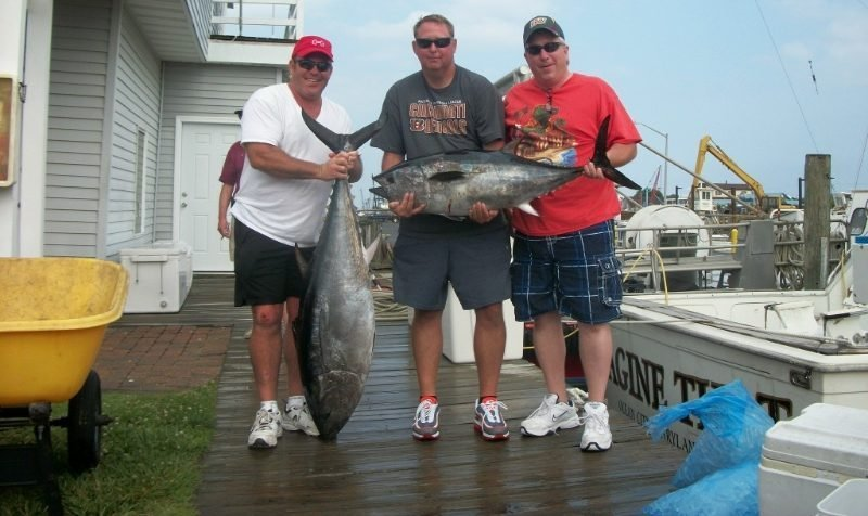 bluefin offshore fishing finchaser
