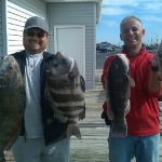 10-24-10-drum-sheepshead-tog.jpg