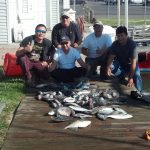 10-25-14-sea-bass-triggerfish-bluefish.jpg